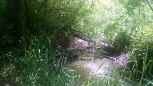 Hess Creek, Hoover Park, Newberg, OR